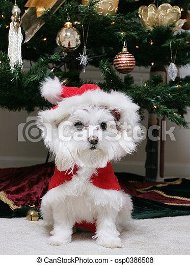 Santa Puppy - csp0386508