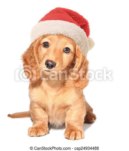 Santa puppy - csp24934488