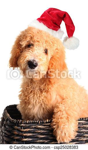 Santa puppy - csp25028383