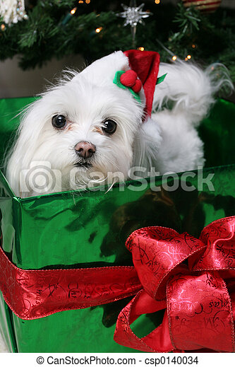 Santa Puppy - csp0140034