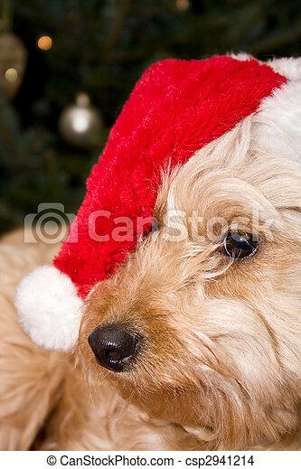 santa puppy - csp2941214