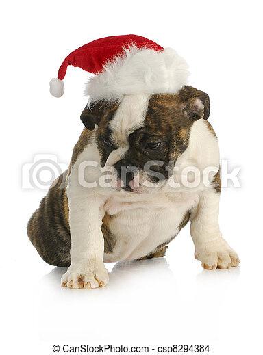 santa puppy - csp8294384