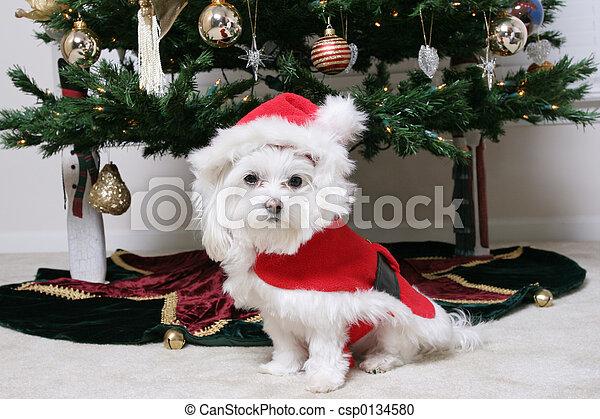 Santa Puppy - csp0134580