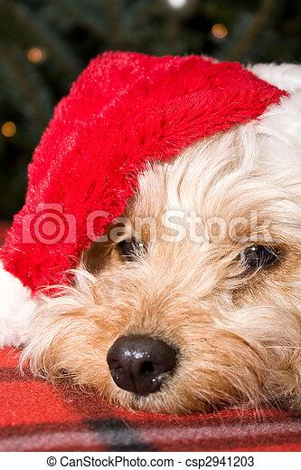 santa puppy - csp2941203