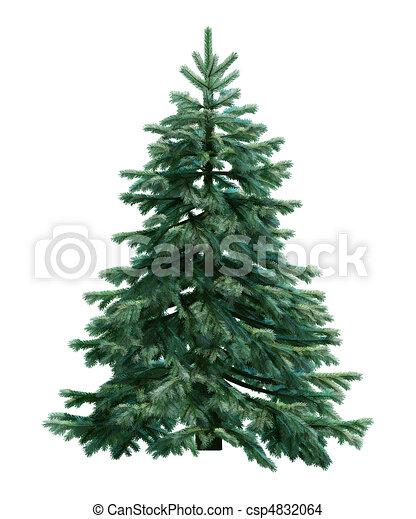 sapin, blanc, arbre, isolé - csp4832064