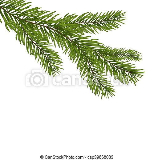 Sapin Fir Branches Isole Illustration Realiste Vecteur