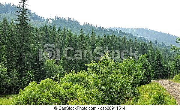 sapin, forêt, arbres - csp28911514