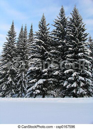 sapin, neige, arbres, sous - csp0167596