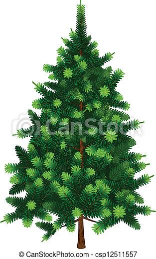 sapin, vecteur, arbre - csp12511557