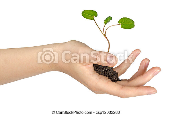 sapling in hand - csp12032280