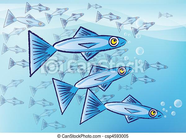 Sardines - csp4593005