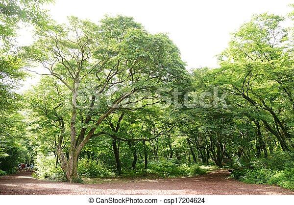 Saryeoni Forest Road in Jeju Isalnd - csp17204624