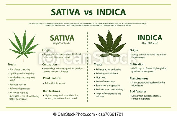 Sativa vs Indica horizontal infographic - csp70661721