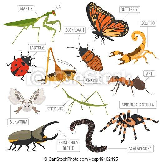 eps vektorbilder von satz insekten haus infographic. Black Bedroom Furniture Sets. Home Design Ideas