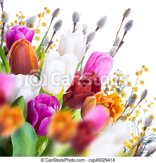 saule, tulipes, butterflies., multi-coloré - csp45029414