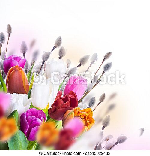saule, tulipes, butterflies., multi-coloré - csp45029432