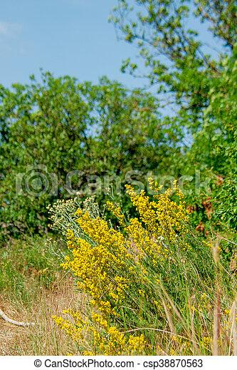 Sauvage Buisson Fleurs Jaune Montagne Arbrisseau Ete Jaune
