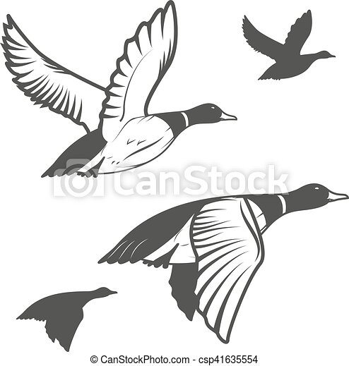 Sauvage canard ensemble hunting voler flying - Illustration canard ...