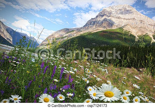 Sauvage Champ Fleurs Paquerettes Montagnes Rocheux Champ Fond