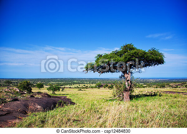 Savanna landscape in Africa, Serengeti, Tanzania - csp12484830