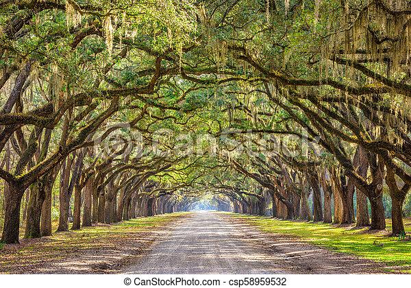 Savannah, Georgia, USA Historic Road - csp58959532