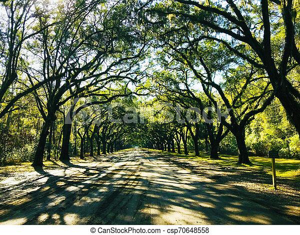 Savannah, Georgia, USA Oak tree lined road, arc shape at Historical Wormsloe Plantation - csp70648558