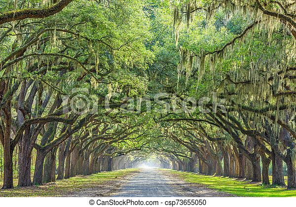 Savannah, Georgia, USA Tree Lined Way - csp73655050