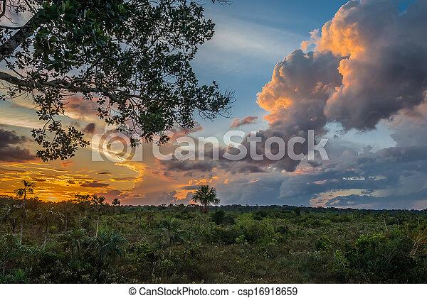savannah, od, madre, peruwiański, amazon dżungla, peru, dios - csp16918659