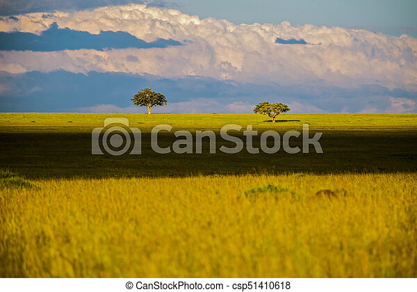 savanne, bäume, afrikas, safari, kenya., landschaftsbild - csp51410618