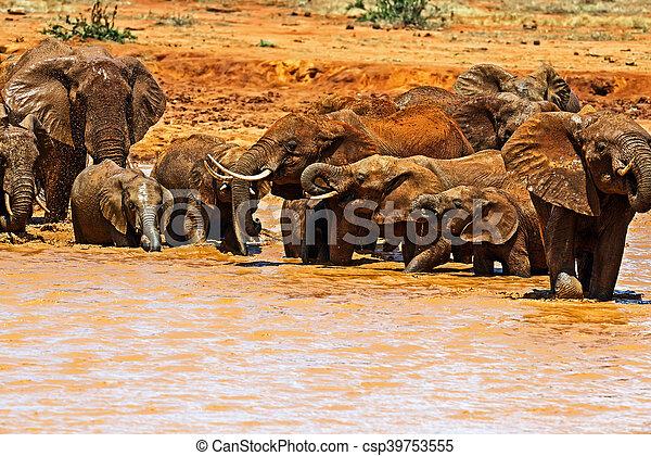 savanne, kudde, olifanten - csp39753555