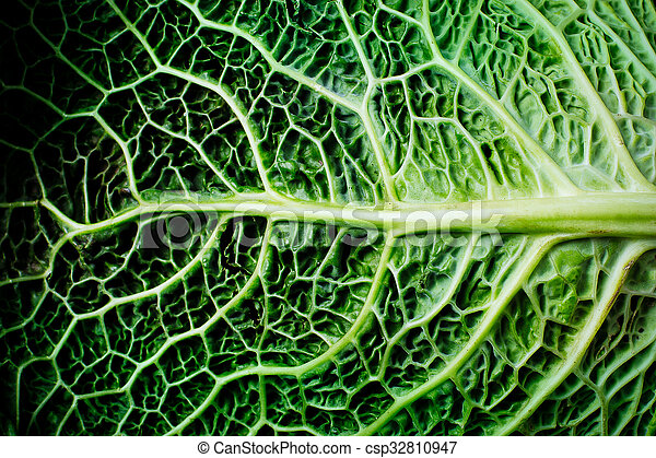 Savoy Cabbage Leaves Close Up Canstock
