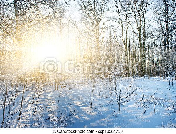 scénique, hiver, forêt - csp10584750