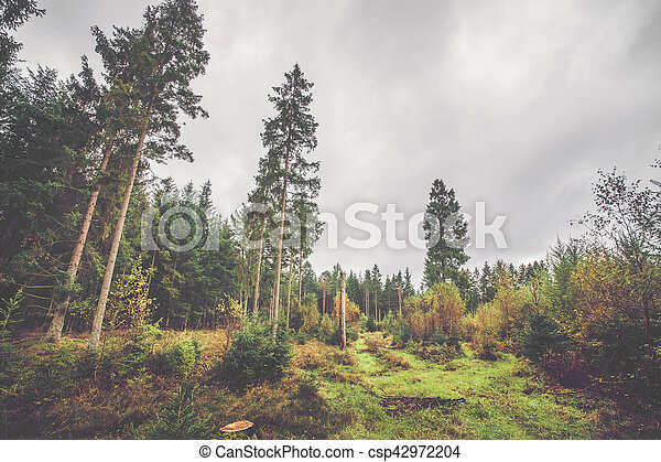 Scandinavian forest in autumn - csp42972204