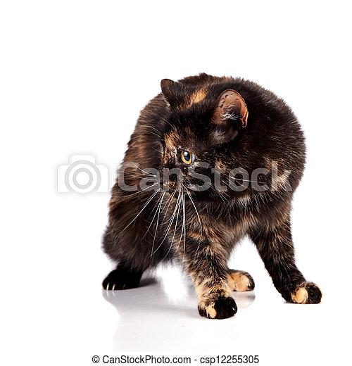 Scared cat - csp12255305