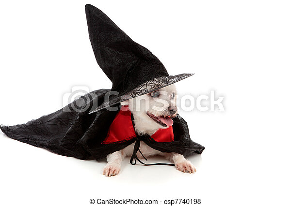 Scary wizard or wicked witch dog - csp7740198