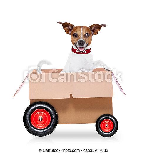 scatola, cane, spostamento - csp35917633