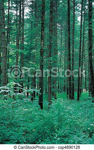 Scene of Nature - csp4890128