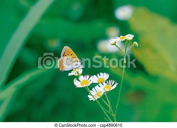 Scene of Nature - csp4890610