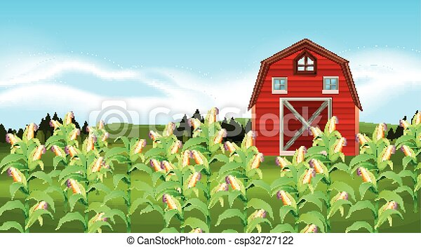 scene with corn field illustration rh canstockphoto com free clipart corn field Corn Field Drawing