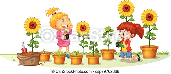 Scene with two girls planting sunflowers in the garden - csp79762866