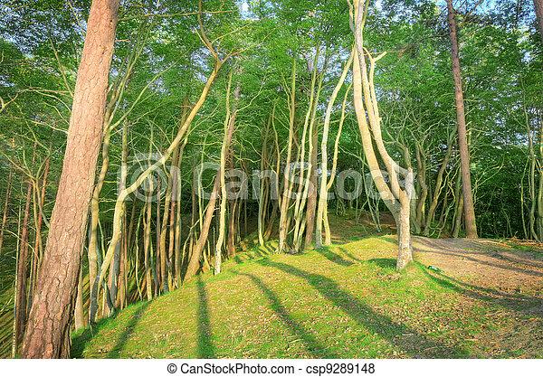 scenery., natura - csp9289148