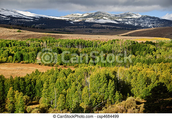 scenic forest green landscape with mountains - csp4684499