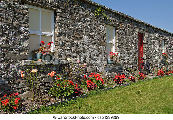 scenic rural irish cottage with bicycle and roses - csp4239299