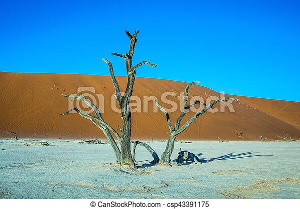 Scenic trees among the sand dunes - csp43391175