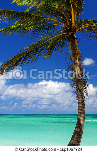 Scenic view on Caribbean sea - csp1067924