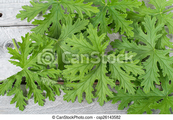 Scented Geraniums Leaves Natural Mosquitoes Repellent On A Wooden