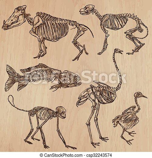 Schädel, freehands, -, knochen, vektor, skelette. Isolated., einige ...