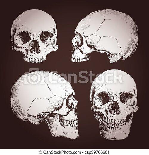 Schädel, zeichnung, menschliche . Verschieden, winkel, tafel ...