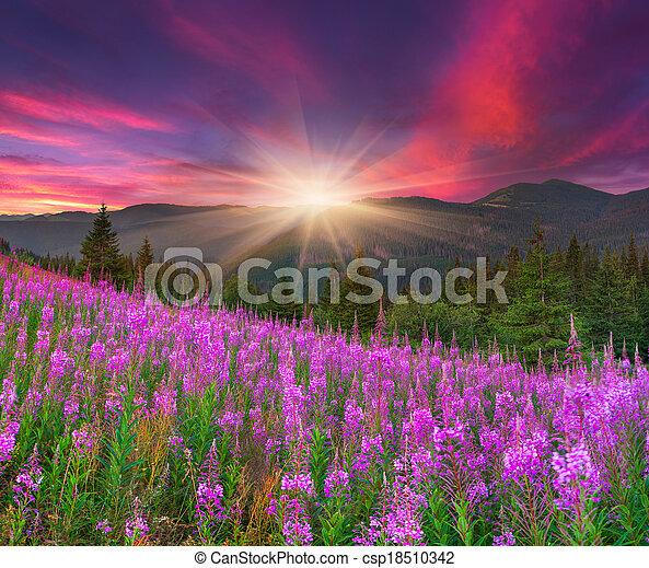 schöne , berge, herbst, rosa blüten, landschaftsbild - csp18510342