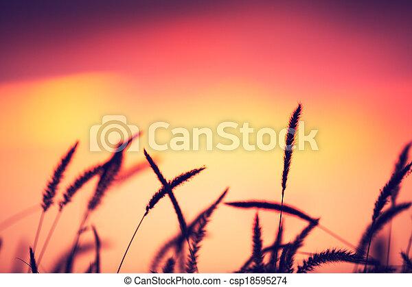schöne , beschwingt, sonnenuntergangfeld, farbe - csp18595274